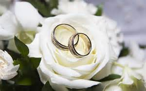 Wedding Bands and Rose