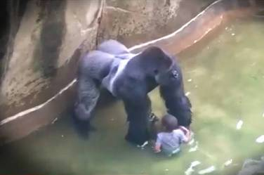 Gorilla and Kid