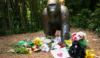 Harambe Shrine